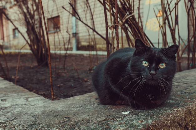Plasencia controla las colonias felinas mediante la esterilización de gatos callejeros
