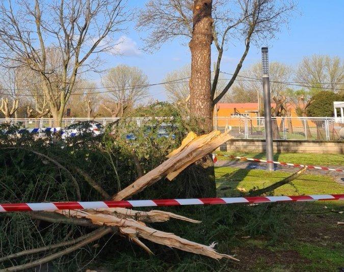 Cae un rayo en un árbol del parque Dulce Chacón de Moraleja
