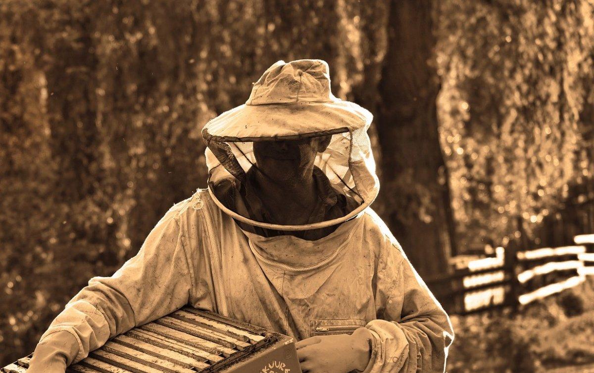 Mensaje de SOS del sector apícola de Extremadura