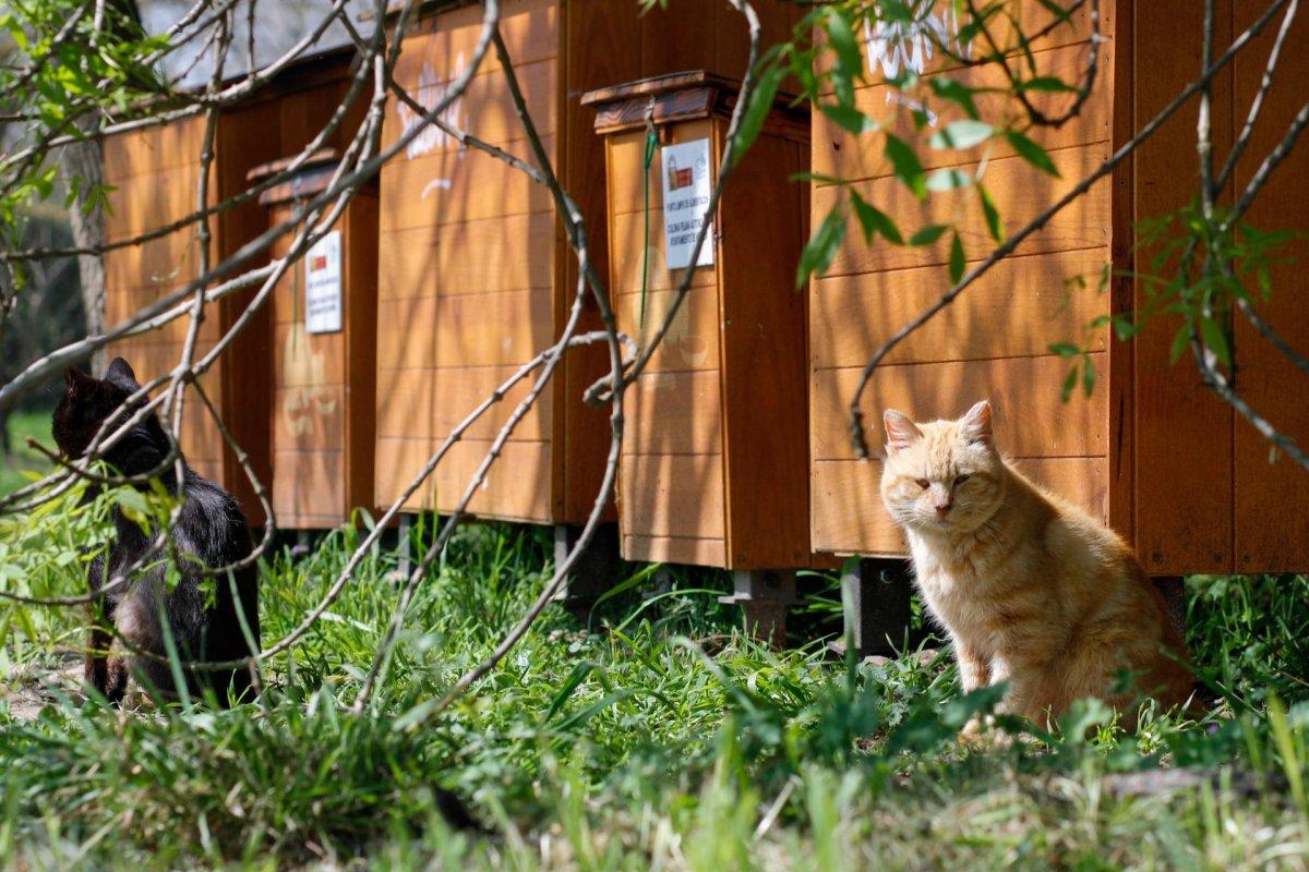 Unidas Podemos Badajoz plantea la gestión y control de gatos callejeros