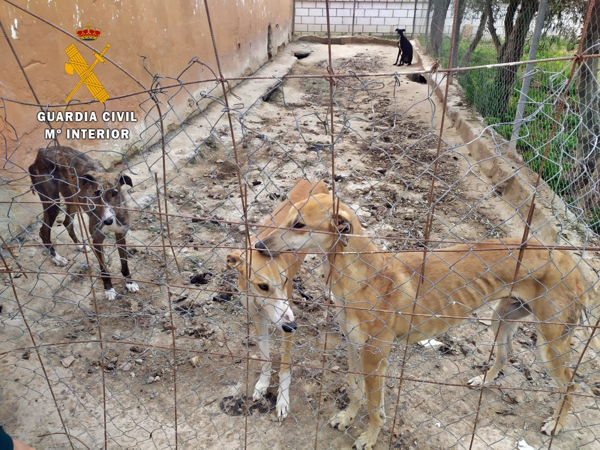 Investigado un vecino de Puebla de la Calzada por mantener desnutridos y mal cuidados nueve perros