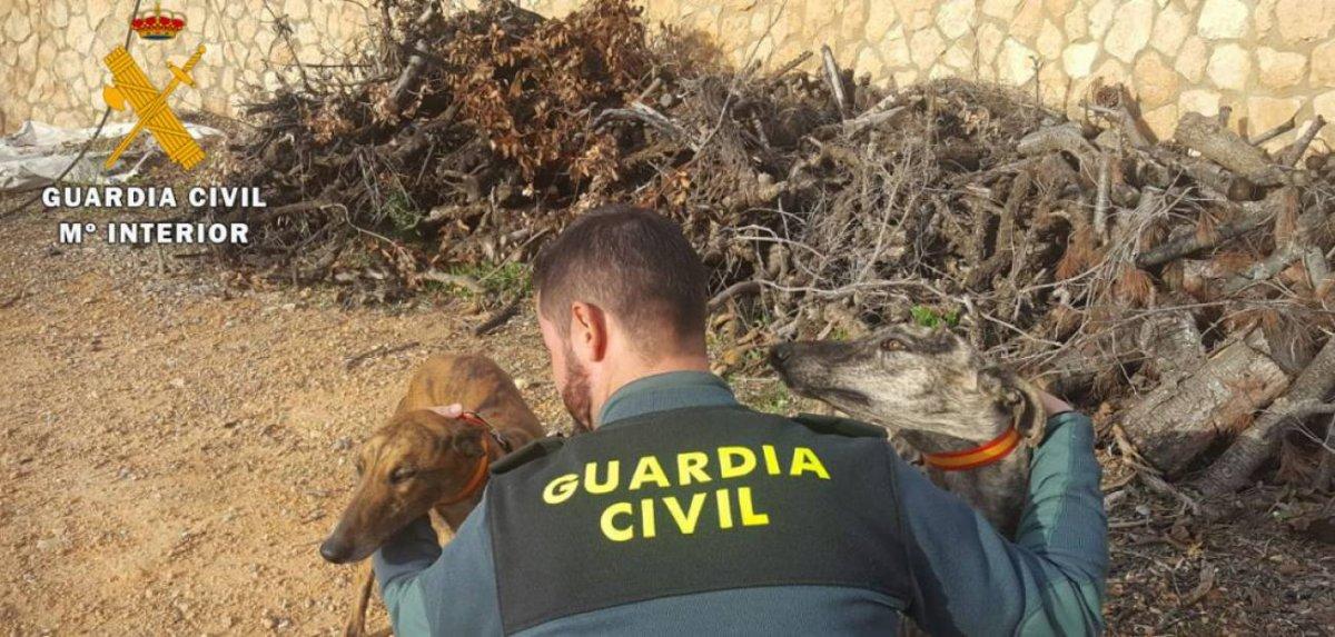 Piden casi cinco años de cárcel para una veterinaria que sacrificó 36 perros no aptos para cazar