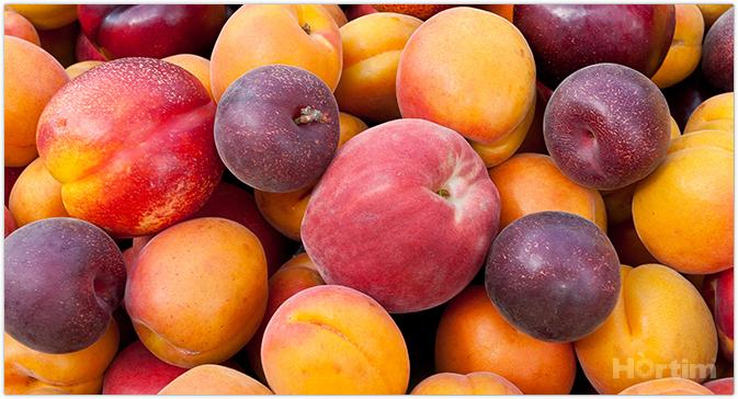 Cerca de 200 productores agroalimentarios de Extremadura venden ya a domicilio