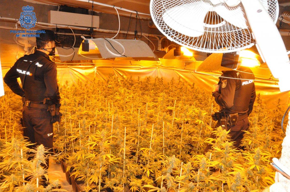 Detenido un hombre de 30 años en Mérida responsable de una plantación de marihuana