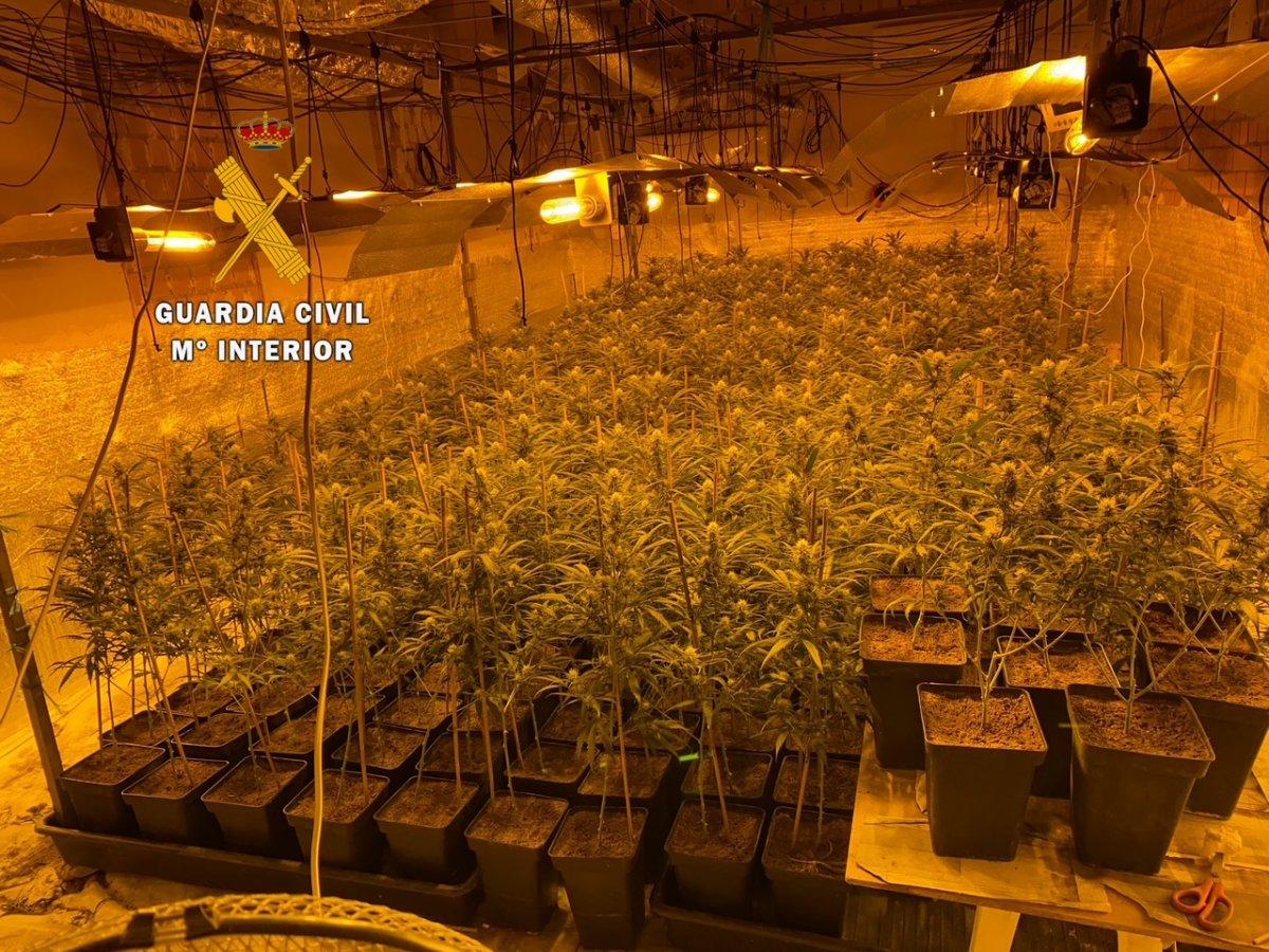 Detenidos dos vecinos de Madroñera por cultivar 396 plantas de marihuana y defraudar 90.000 euros en fluido eléctrico