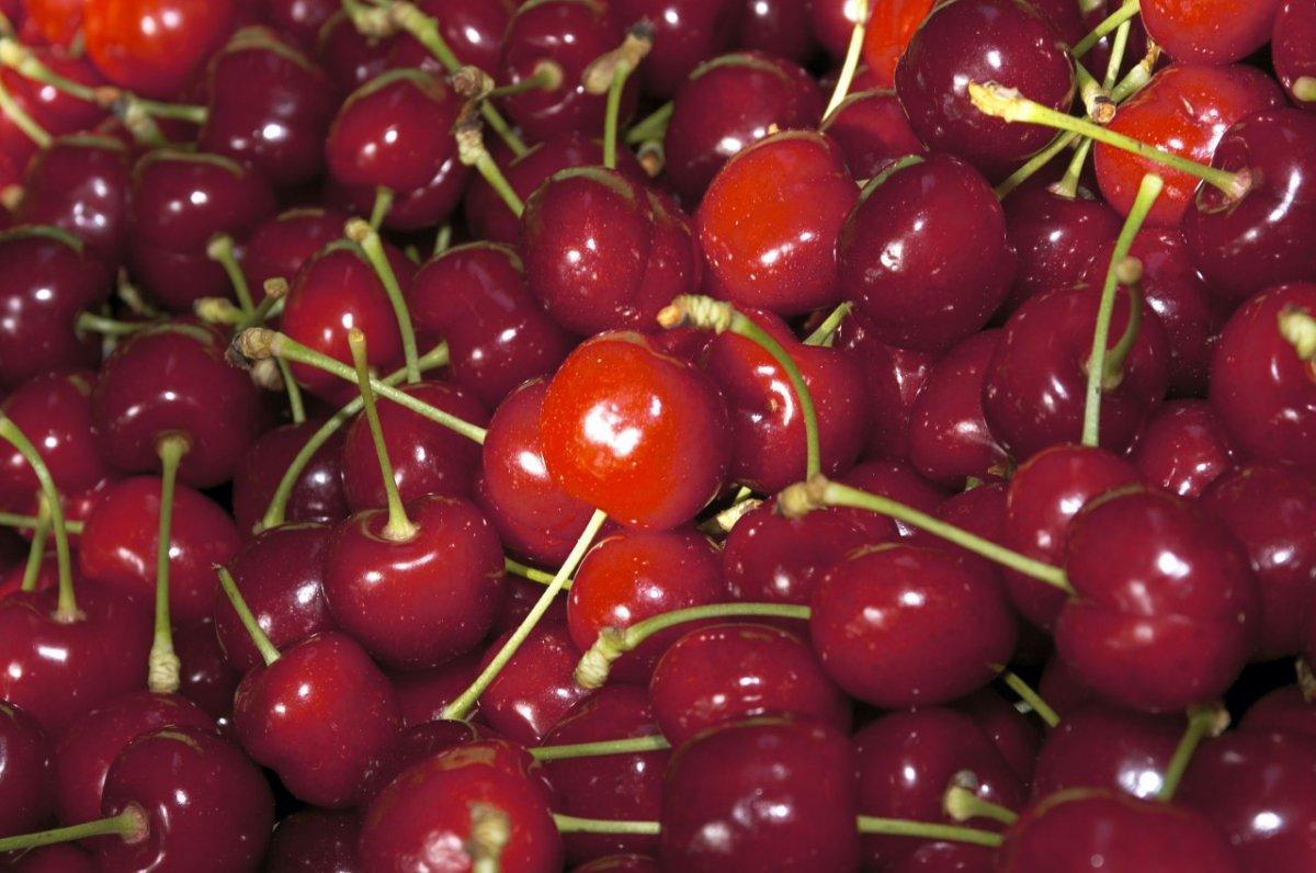 Ya están a la venta las primeras cerezas certificadas con DOP del Jerte
