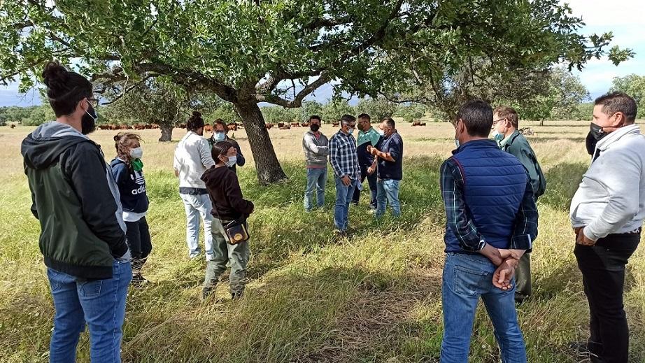 Navalmoral de la Mata forma a jóvenes en la práctica del pastoreo dirigido