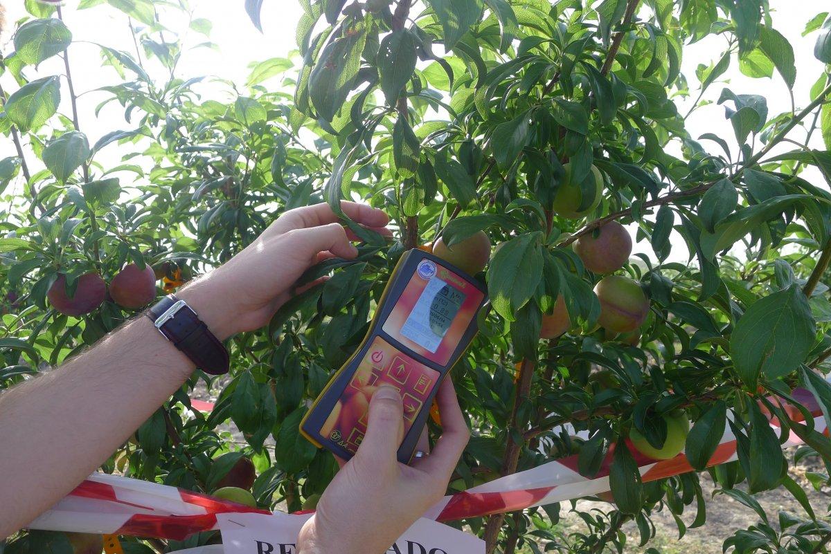 Extremadura ya tiene nuevas técnicas para saber el grado de madurez de la fruta