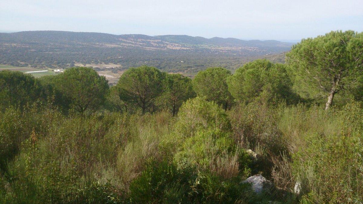 Extremadura invertirá 845.000 euros en tratamientos silvícolas para prevenir incendios en Gata