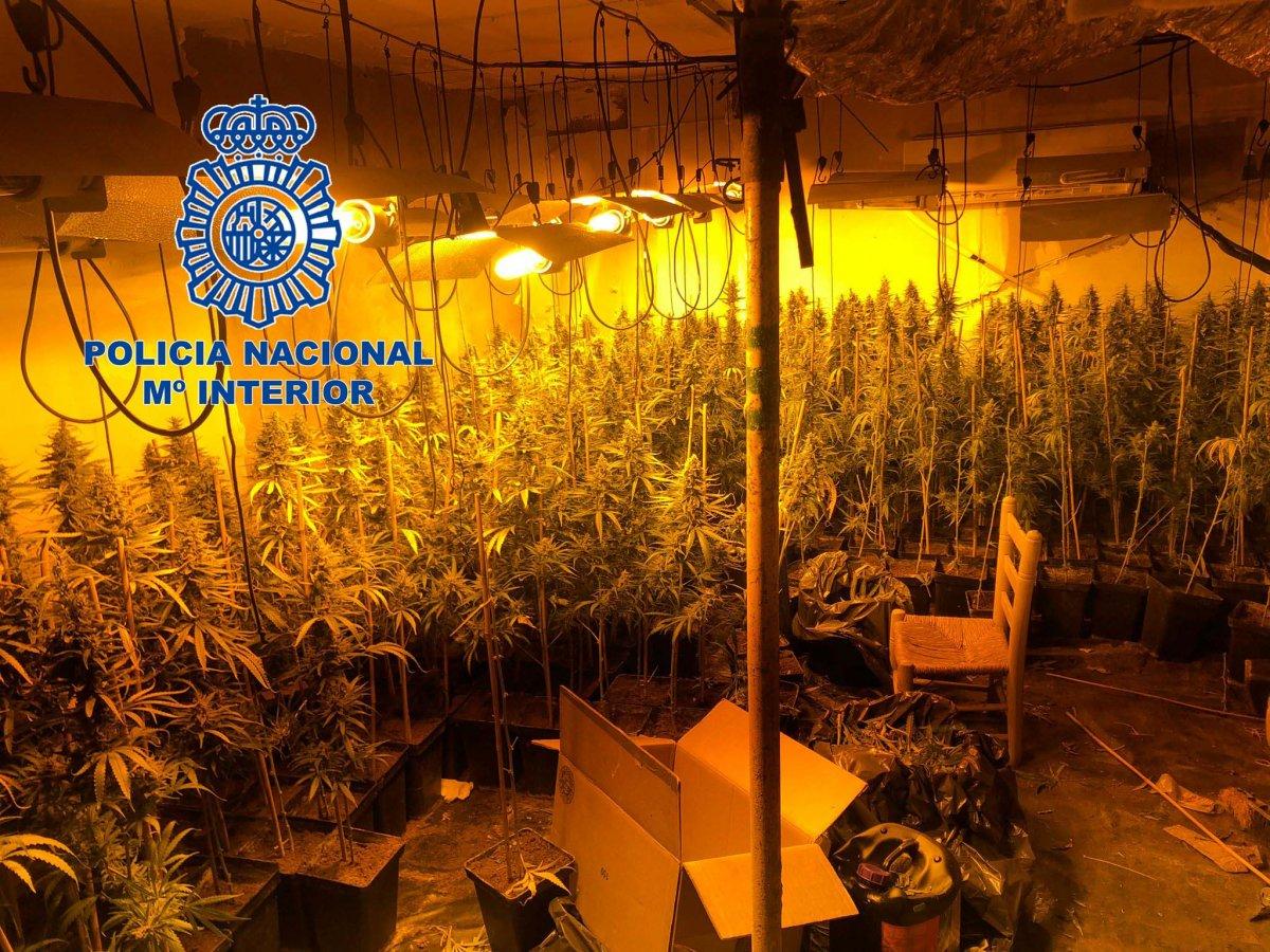 Detenidos seis hombres acusados de cultivar en una casa cerca de 500 plantas de marihuana