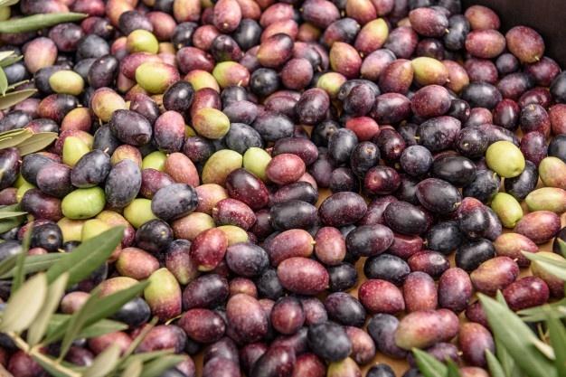 Estados Unidos castiga a la aceituna negra del norte de Cáceres con un gravamen del 35%