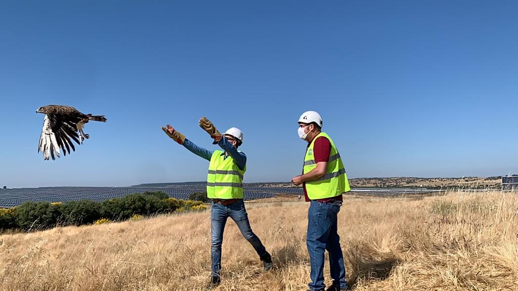 Liberan tres águilas culebreras y un milano real en el entorno cacereño de Logrosán