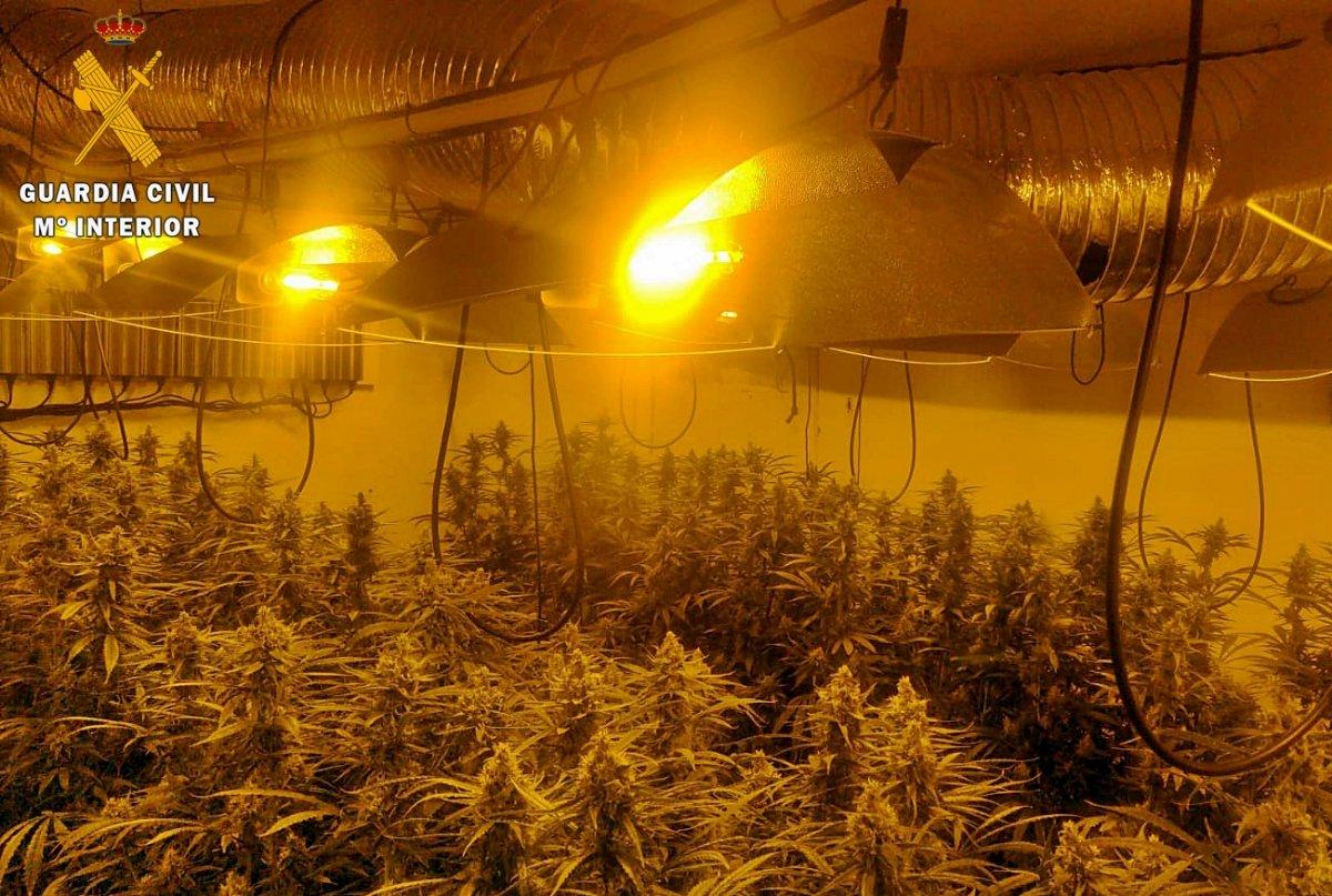 """La Guardia Civil desmantela una plantación """"indoor"""" de marihuana con 592 plantas"""