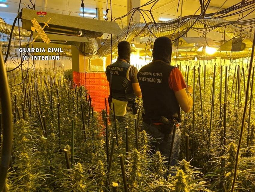 Detenidas cinco personas por tener dos plantaciones con más de 3.000 plantas de marihuana