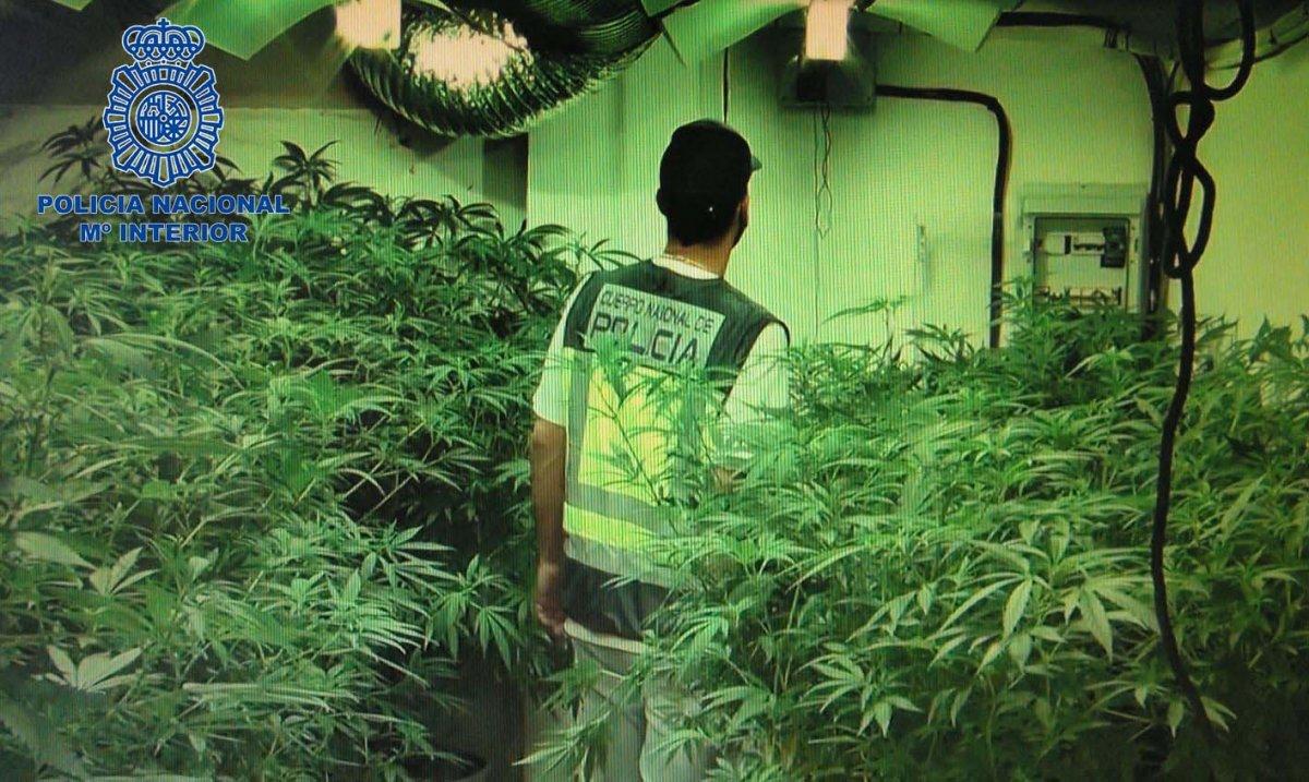 Detienen a un hombre acusado de tener un plantación de marihuana en una barriada de Badajoz