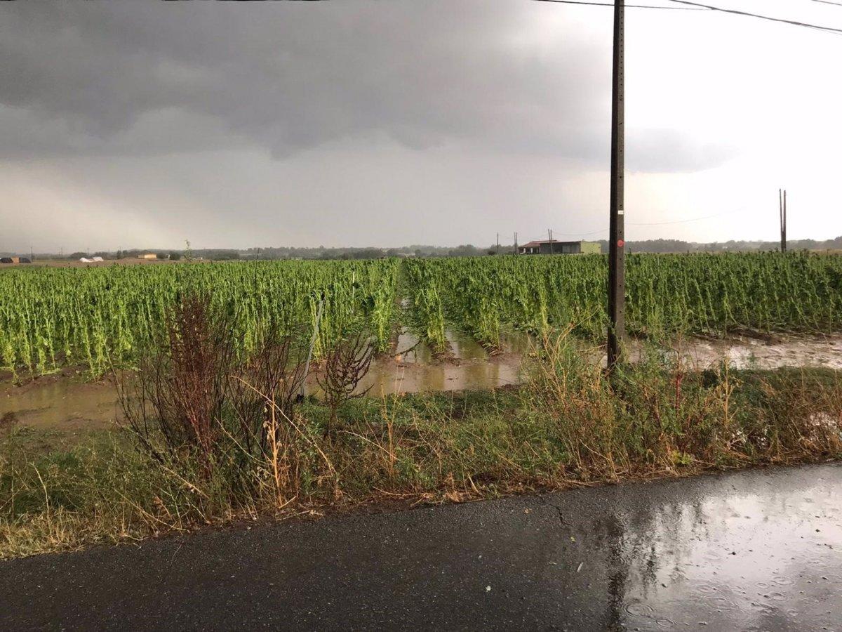 APAG pide a Agroseguro que agilice las peritaciones de los daños causados por las tormentas