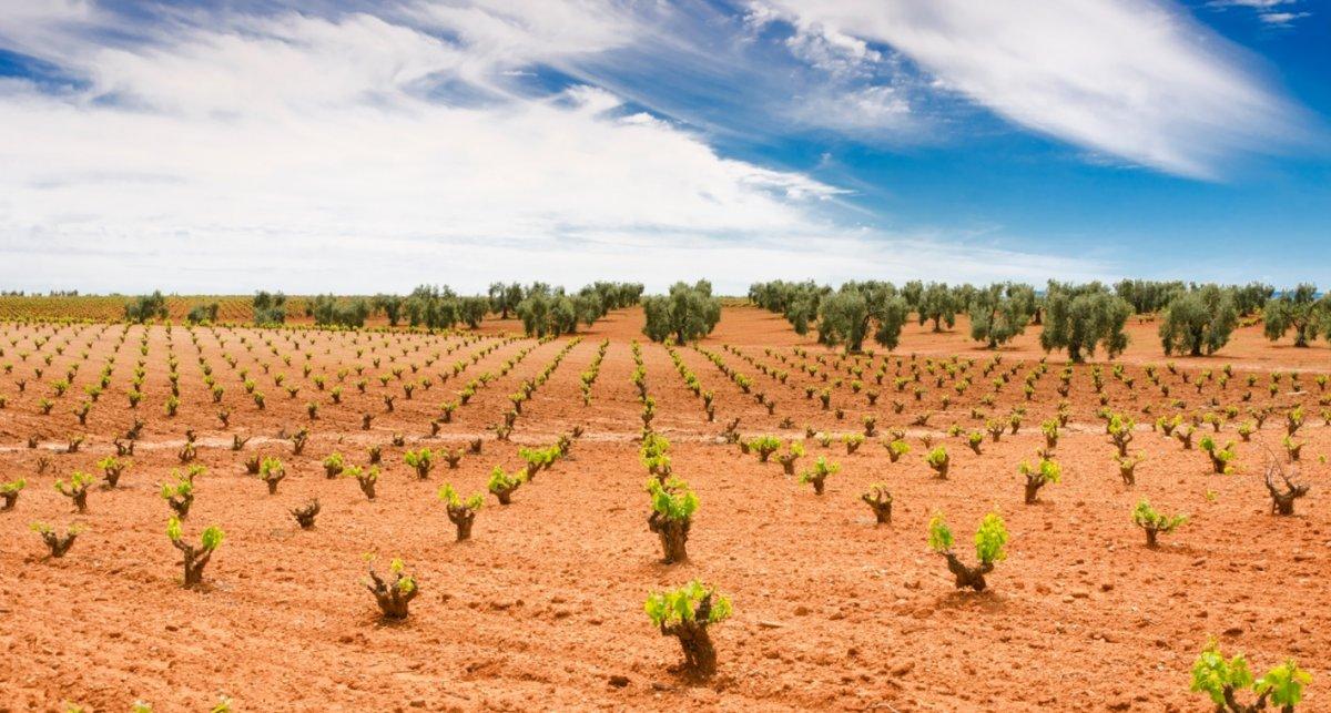 Agricultura abona 15 millones de euros correspondientes a las solicitudes de la PAC de 2020