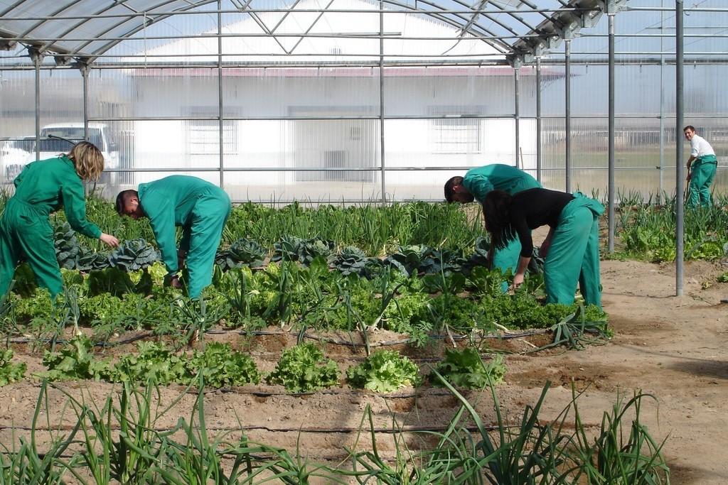 Agricultura publica el decreto que regula las condiciones para entidades agroalimentarias de la región