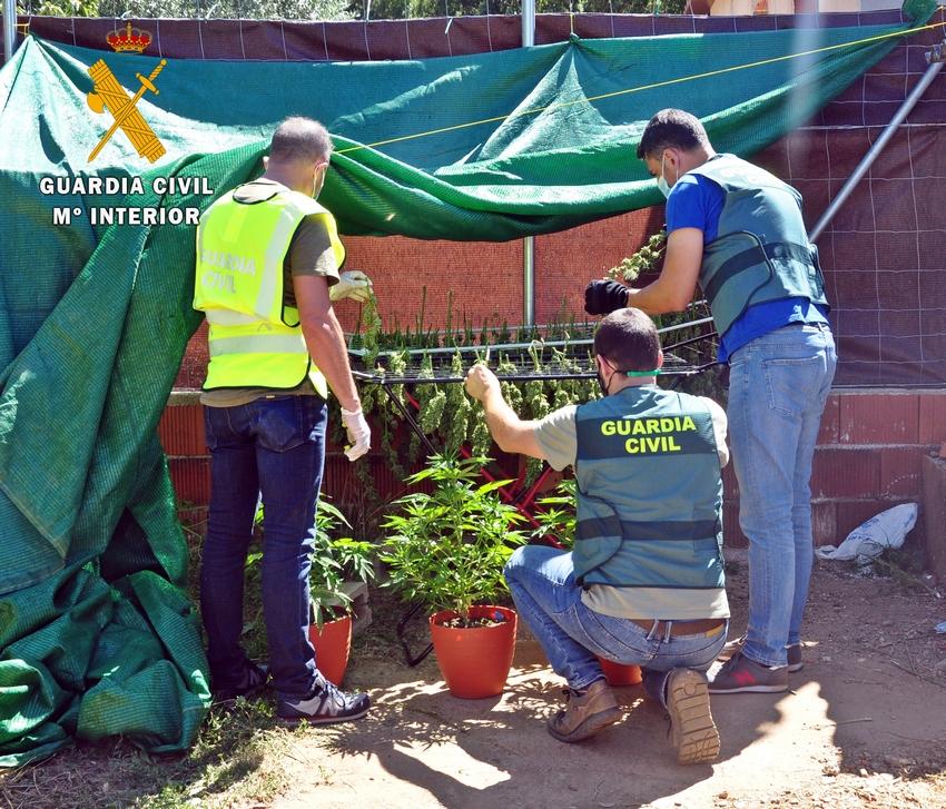 Detenidas dos personas de La Codosera y San Vicente por tener dos plantaciones ilegales de marihuana