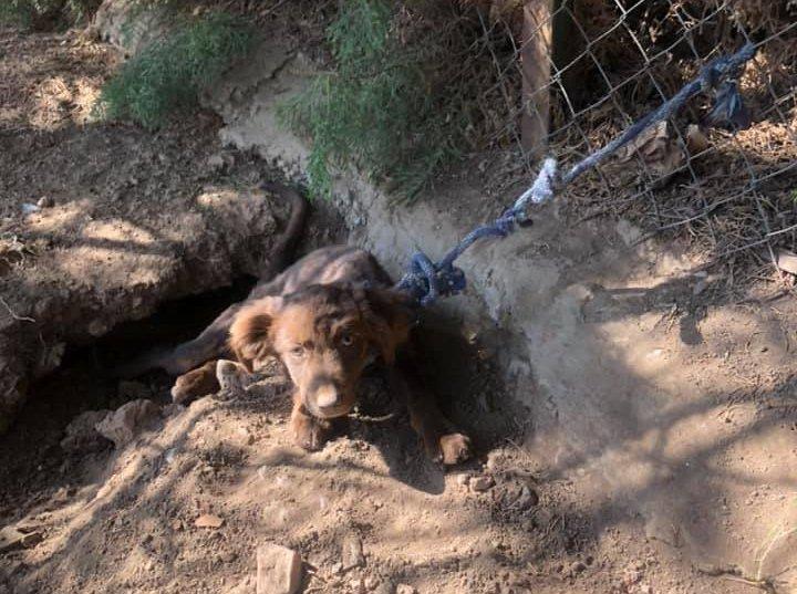 Abandonan atado y sin agua a un cachorro de dos meses en Villafranca de los Barros