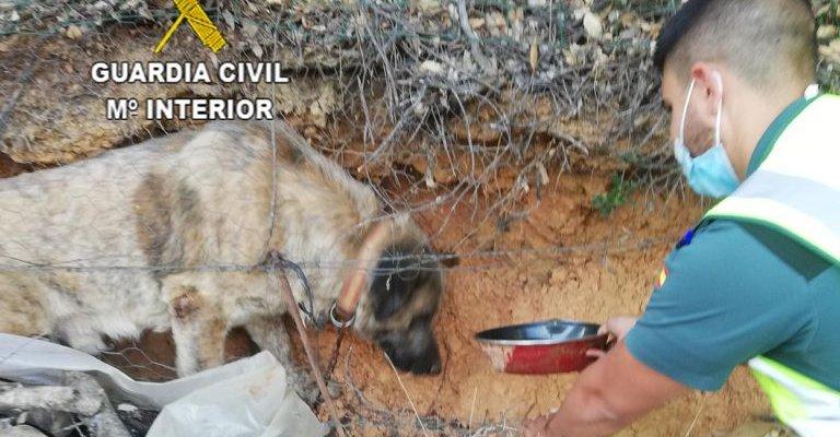 La Guardia Civil rescata un perro que había quedado atrapado tras caer de dos metros de altura
