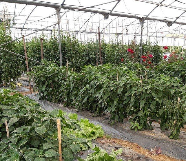 Extremadura amplía la superficie de cultivo ecológico en más de mil hectáreas