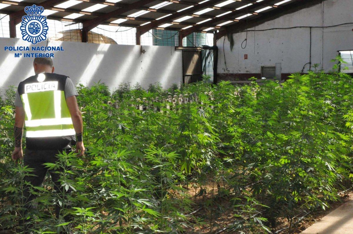 La Policía Nacional desmantela una plantación de marihuana en una nave de tamaño industrial