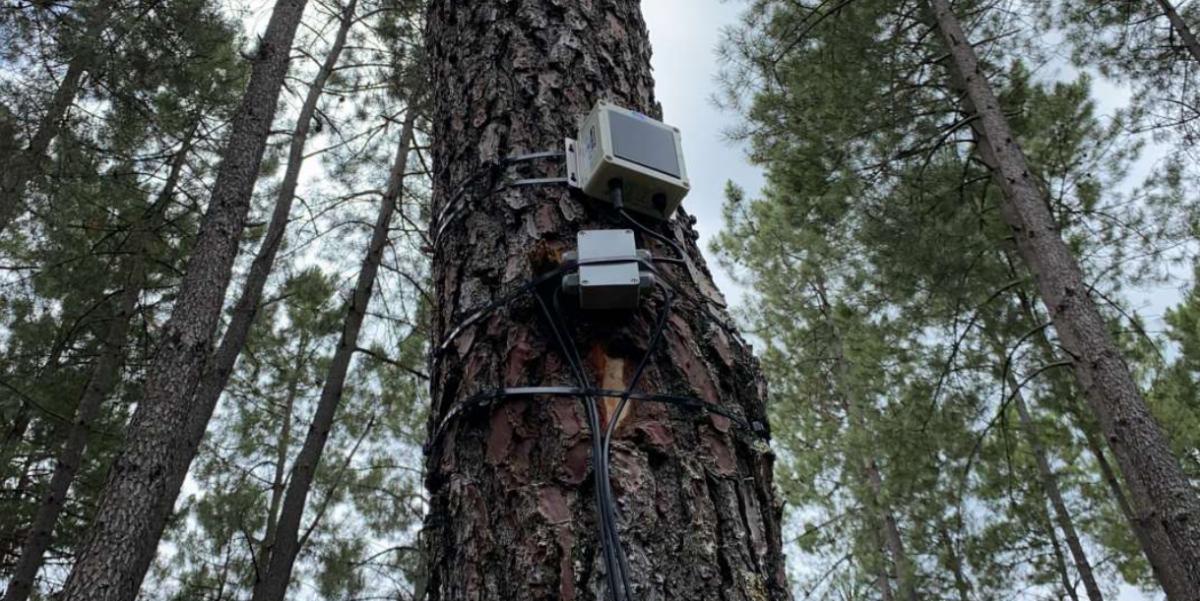 Jarandilla de la Vera acoge un proyecto piloto para prevenir incendios forestales