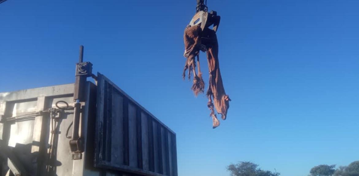 Un ganadero de Montehermoso denuncia la muerte a tiros de siete vacas y la desaparición de otras dos