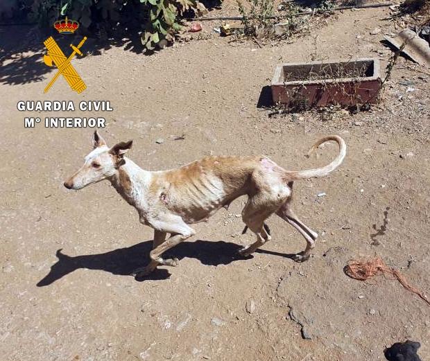 Investigan a un vecino de Zahínos por un supuesto delito de maltrato  animal