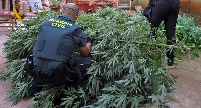 La Guardia Civil desmantela en una misma calle de Olivenza dos puntos de cultivo de plantas de marihuana