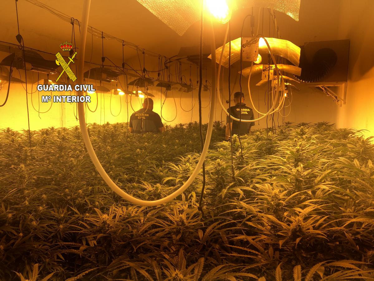 La Guardia Civil interviene más de 900 plantas de marihuana en 2 cultivos indoor localizados en Casar de Miajadas
