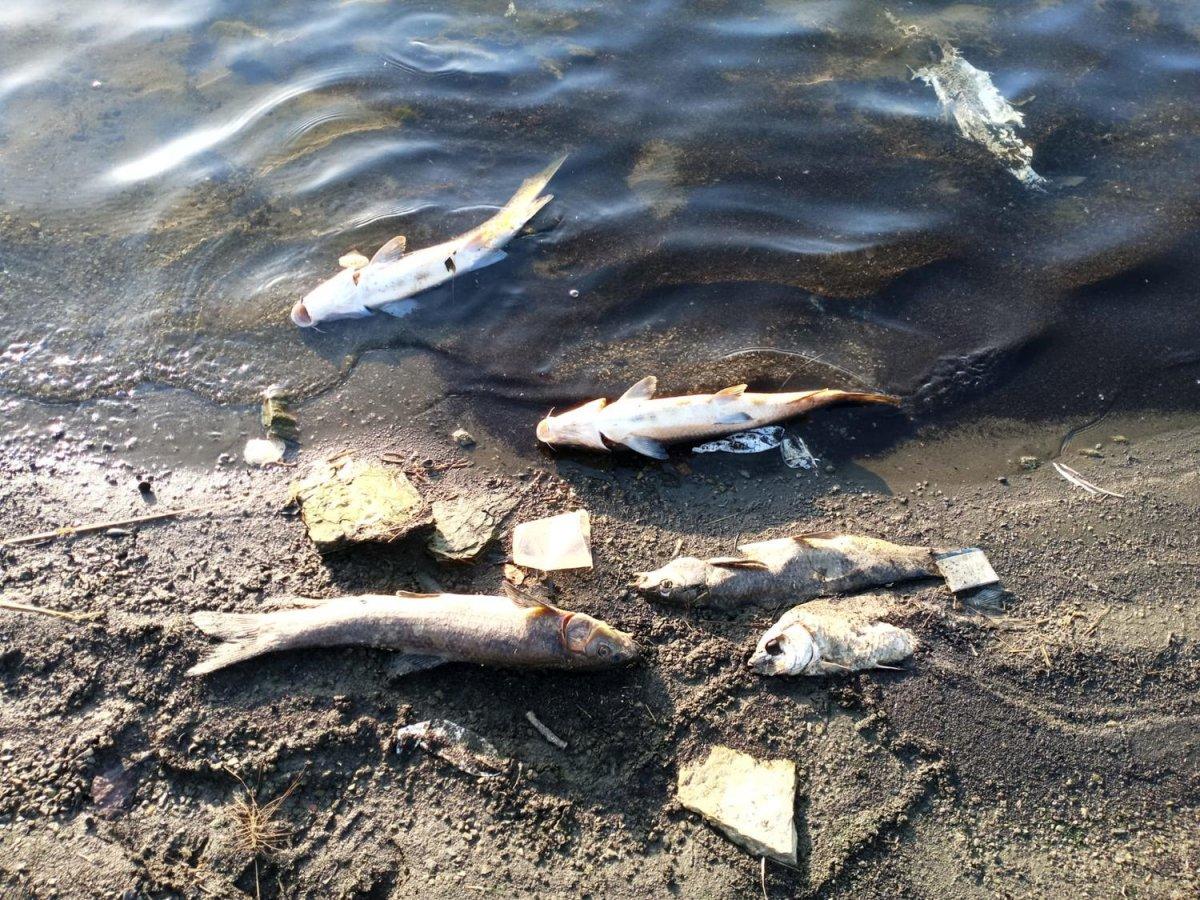 Podemos pide que se investigue la muerte de miles de peces en Tentudía para evitar un desastre como el del Mar Menor