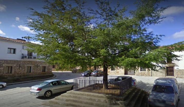 Herido grave un hombre de 81 años tras caer de un árbol en su domicilio de Pozuelo de Zarzón