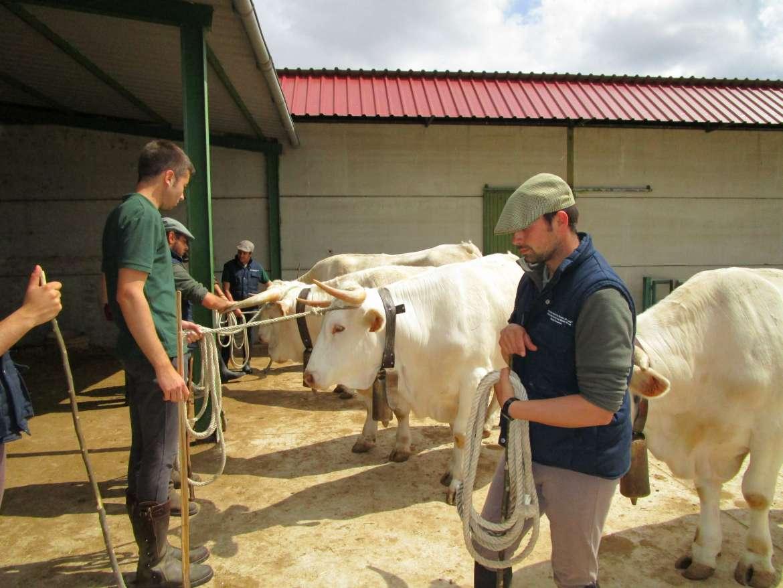 La Feria de Zafra contará con cerca de 2.000 animales de 150 ganaderías españolas