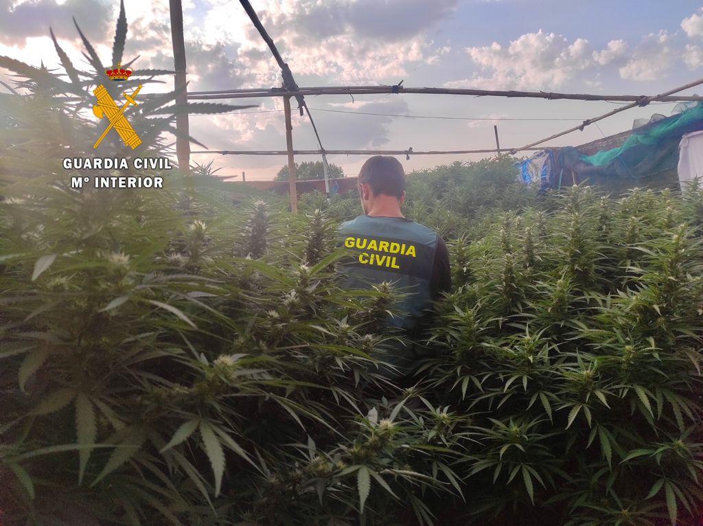 Detenidos dos vecinos de Moraleja y otros dos de Riolobos acusados de tráfico y cultivo de drogas