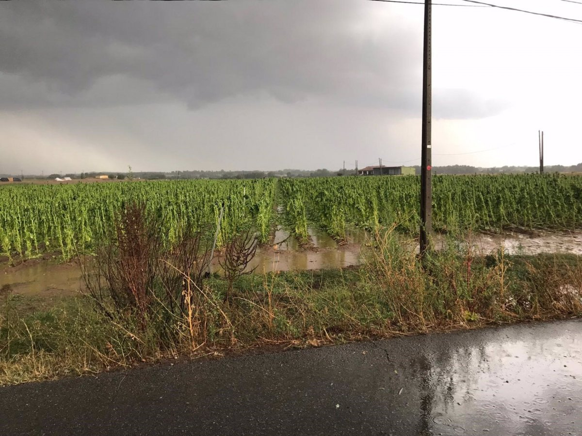 Las fuertes lluvias y el granizo dañan olivares y explotaciones de maíz del centro de Extremadura